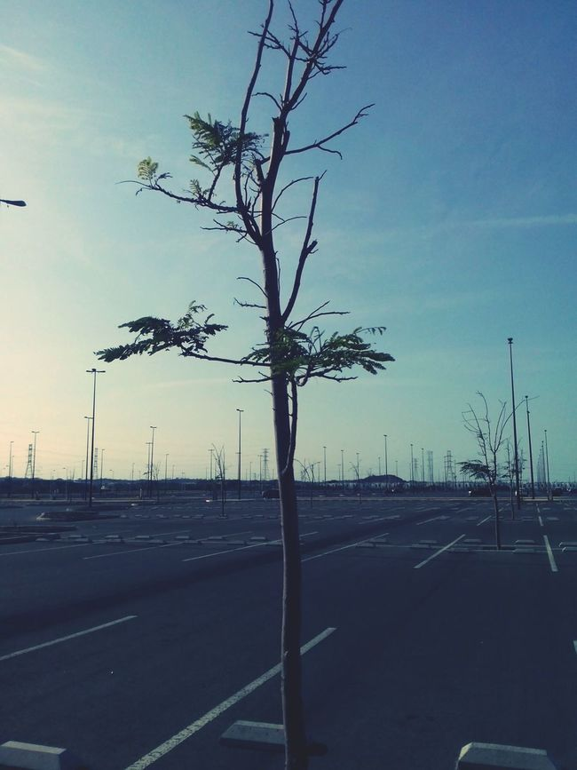 Tree Tree_collection  Hugging A Tree Spring Has Arrived Sunny Day Sunny Afternoon Empty Parking Lot Peaceful And Quiet EyeEm Nature Lover Taking Photos