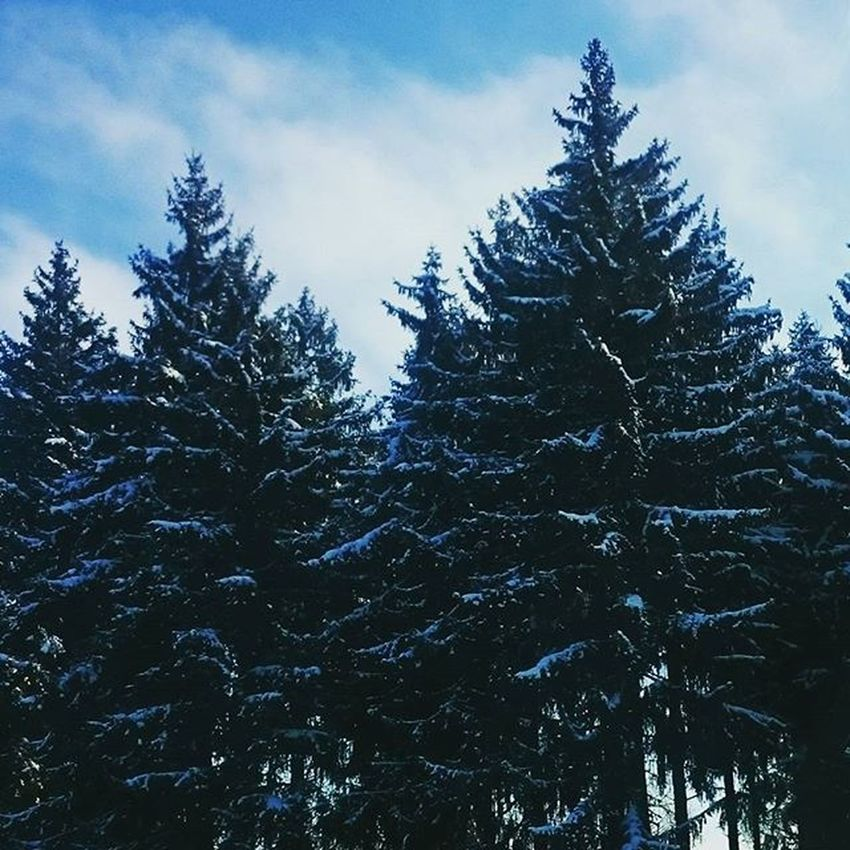 Blackforest Coldoutside Trees Nature Snapshot