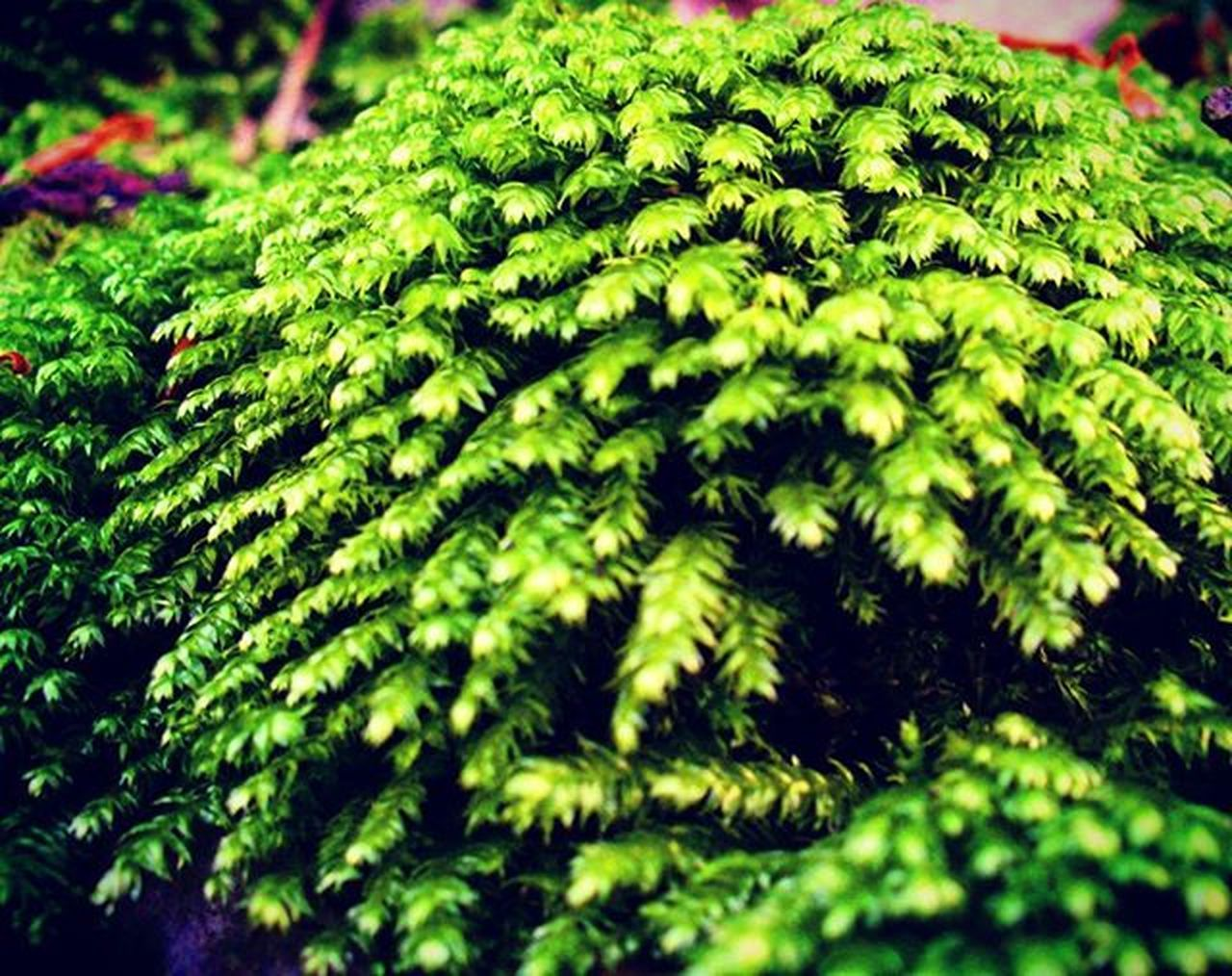 green, green color, nature, fern, growth, leaf, day, close-up, no people, beauty in nature, freshness, outdoors