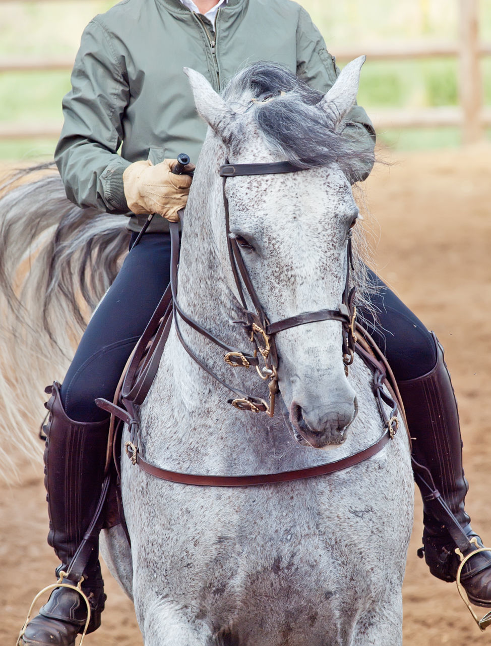 horse, one animal, horseback riding, one person, bridle, domestic animals, mammal, front view, real people, field, outdoors, day, men, people