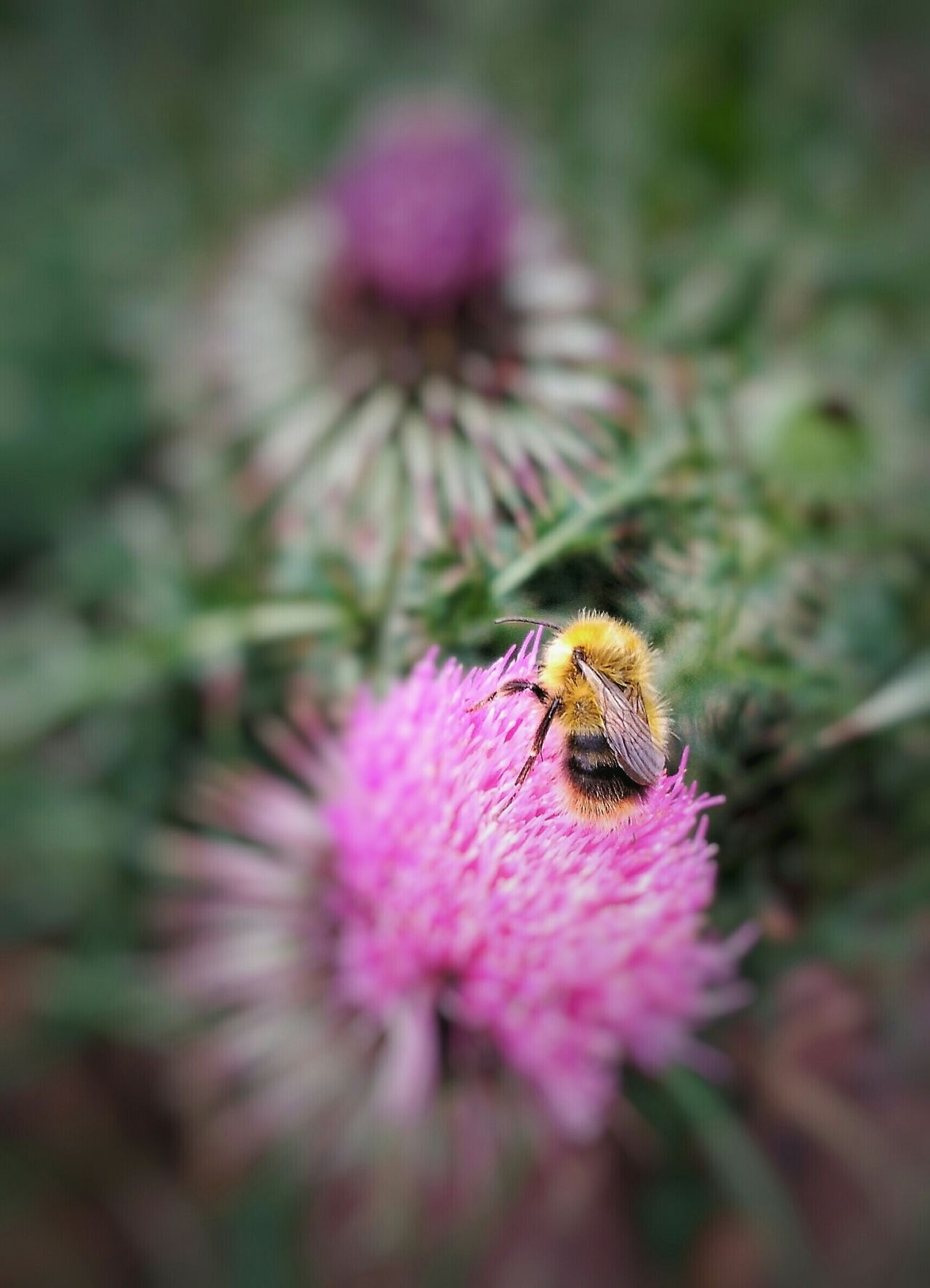 Beautiful stock photos of bee, Animal Themes, Animals In The Wild, Beauty In Nature, Blooming