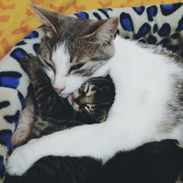 Baby. 😻 Cat Cats