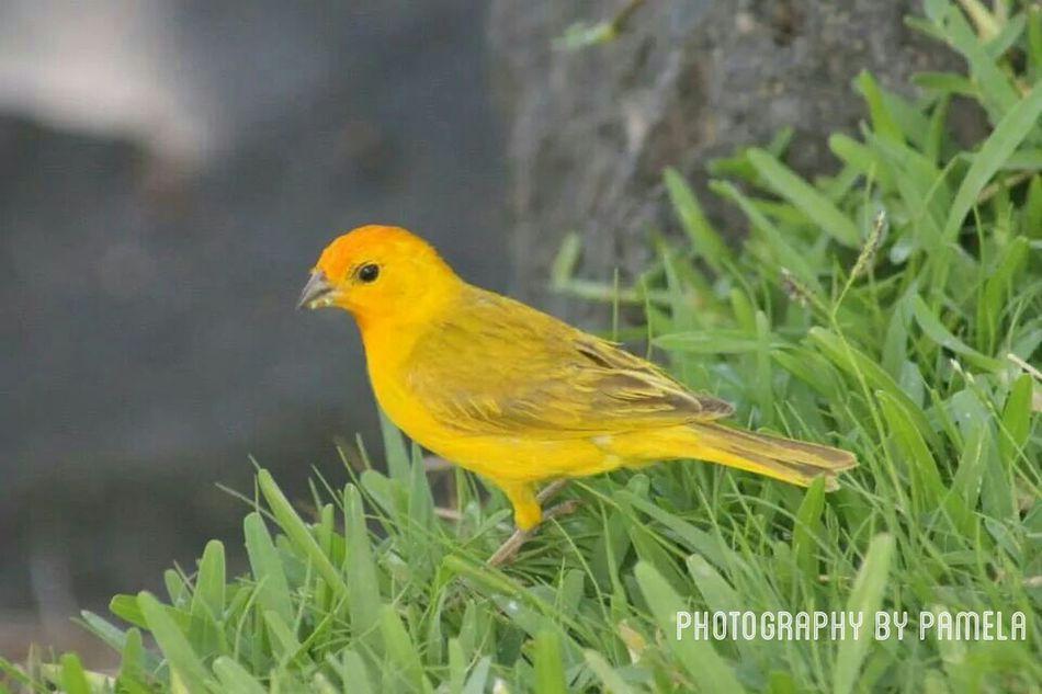 Nature Birds Hawaii⍥⃝