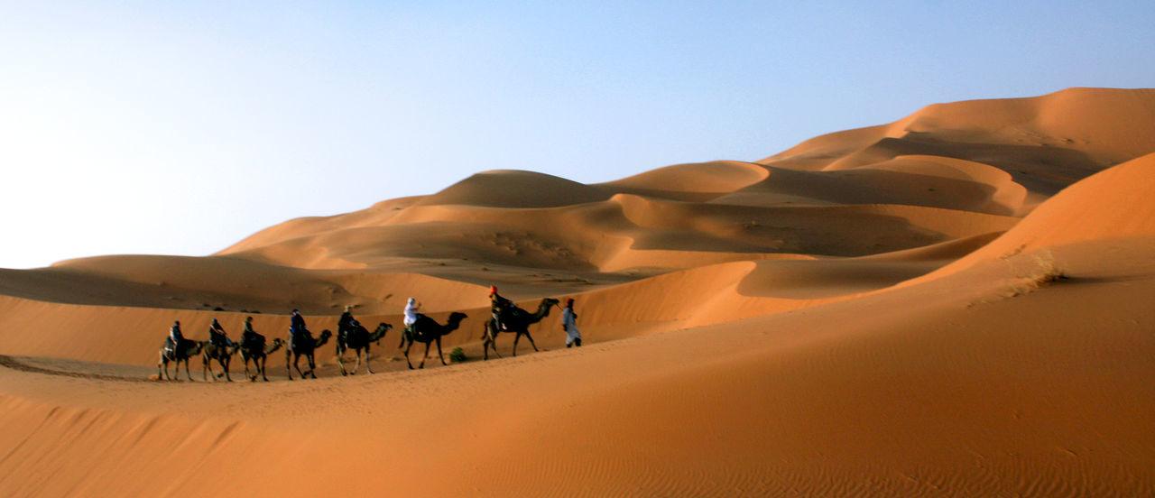 Beautiful stock photos of camel, Animal Themes, Camel, Camel Ride, Clear Sky