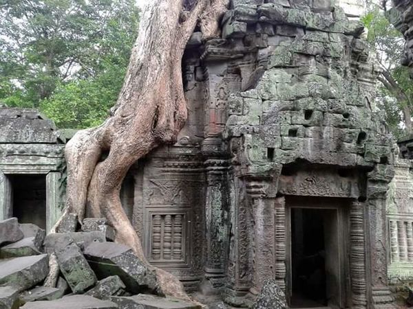 Johnnelson Religious  History Architecture Worldheritage Cambodia Ta Prohm Temple Tomb Raider  Angkor Wat Jungle Tree Nature Reclaiming Southeast Asia John Nelson Lifeasiseeit Southeastasia