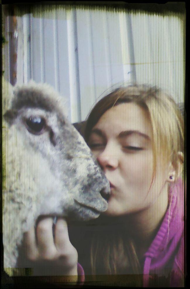 The EyeEm Facebook Cover Challenge Farm Animals That's Me Enjoying Life