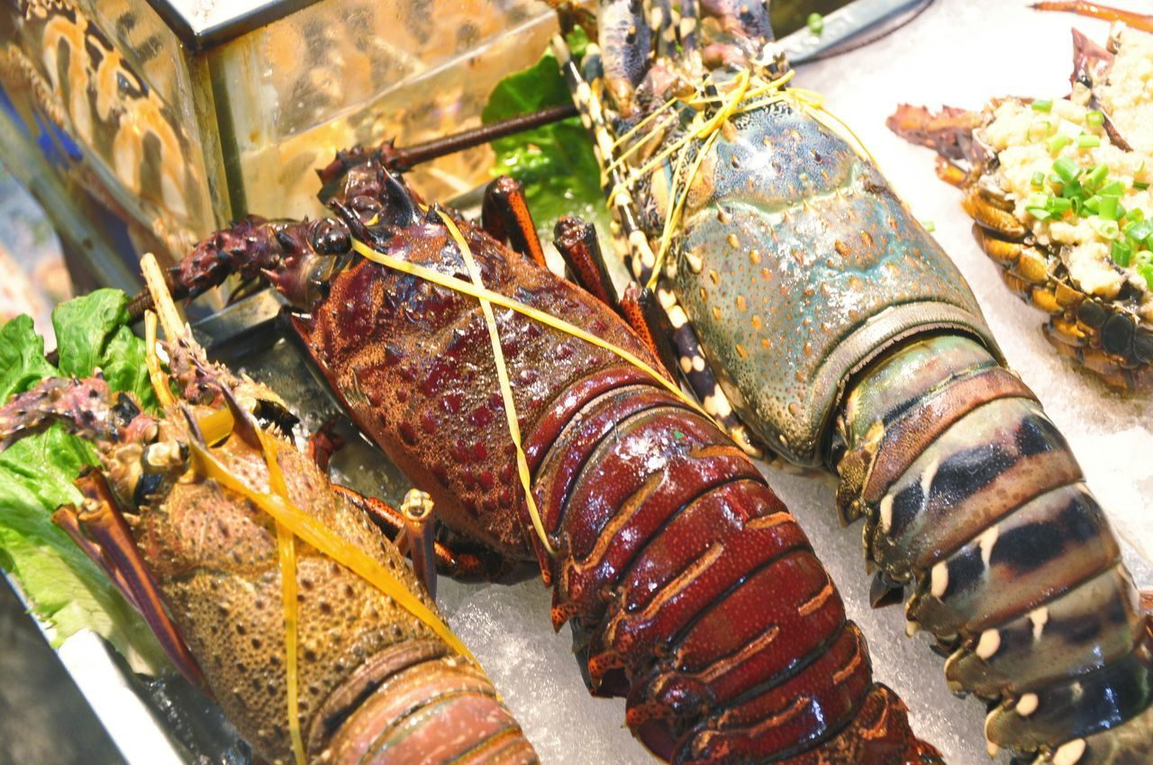 Beautiful stock photos of lobster, Cooked, Food, Food And Drink, Freshness