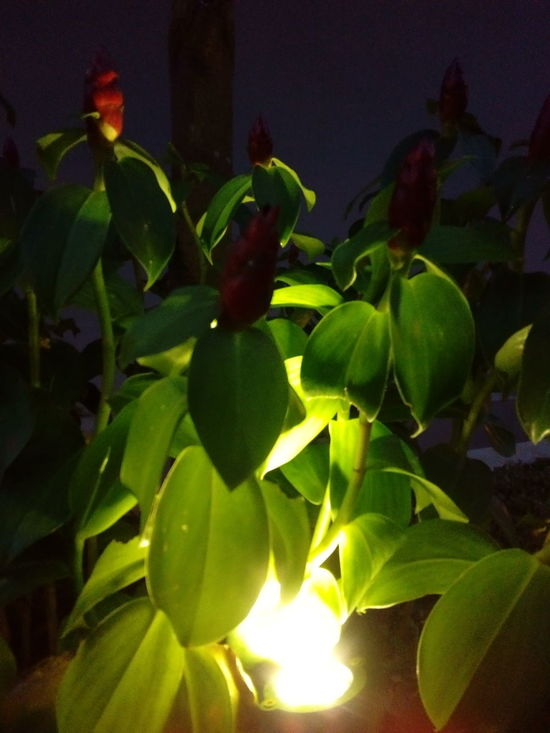 Green Color Growth Nature Leaf Flower Freshness Close-up Plant Beauty In Nature No People Fragility Outdoors Flower Head Day Flowers At Night Exploring Style
