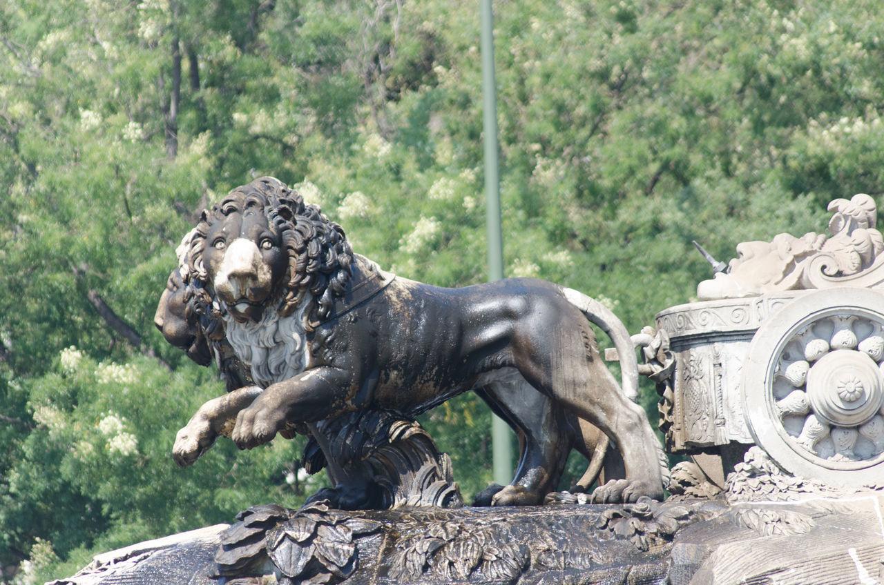 Arquitectura, Escultura y parques de Madrid, leones de la Cibeles. 2013 Cibeles Day Eddl Lion Madrid No People Outdoors Sculpture