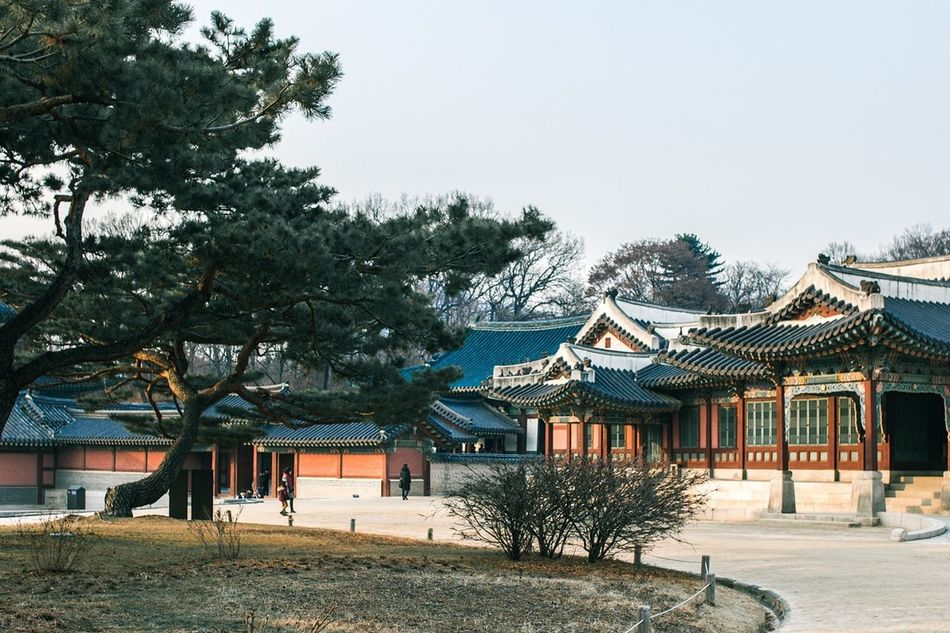 Tree Architecture Cultures Seoul Trip Travel ASIA Palace History Seoul Religion Korean Traditional Architecture Korea Traditional Architecture Built Structure Changduk Palace Korea Temple Palace Of Culture Korean Style Asian Culture Cold Temperature Winter Outdoors Sky Road Building Exterior Nature