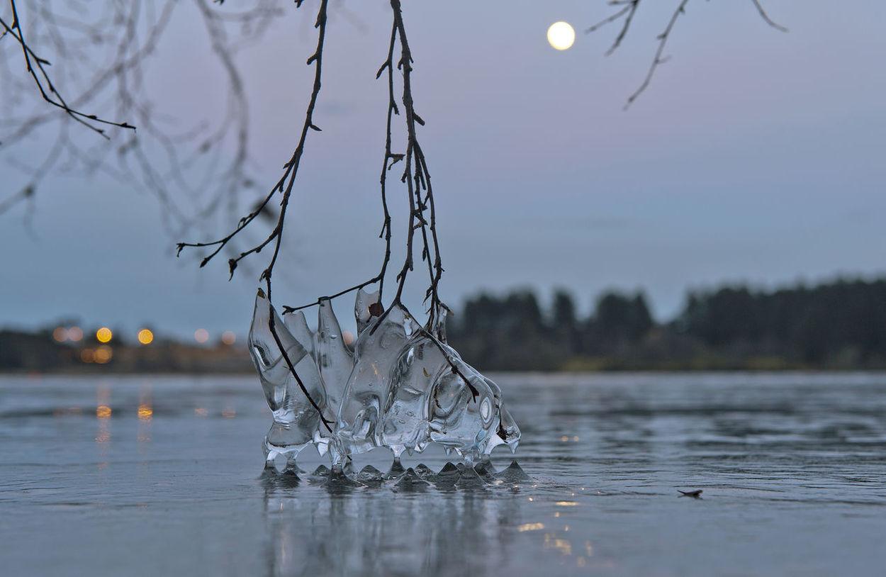 Bokeh Branch Hålandsvatnet Ice Lake Landscape Moon Nature Night Nikon Norge Norway Outdoors Randaberg Rogaland Tree Water Winter