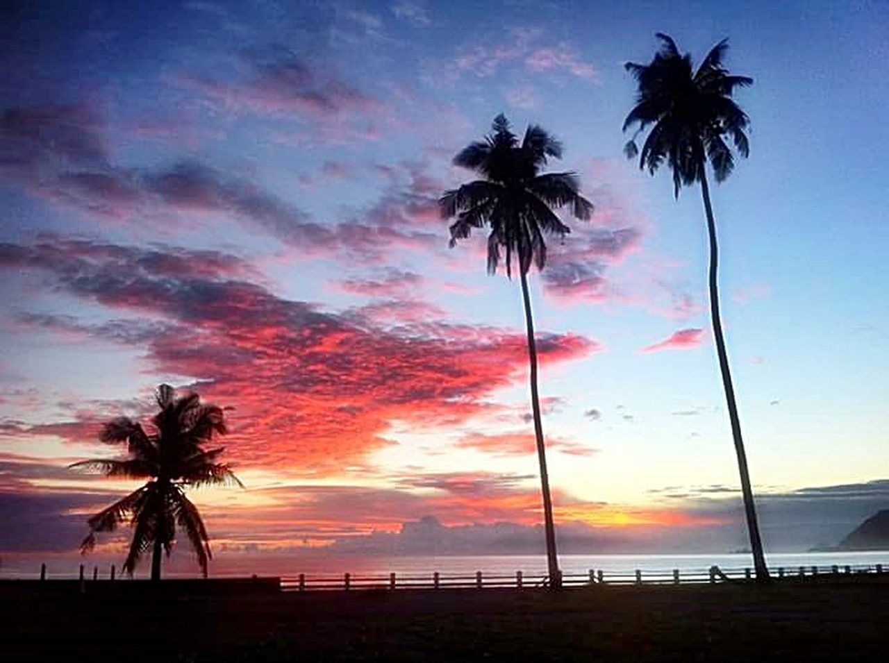 palm tree, silhouette, sunset, tree, cloud - sky, beach, sky, scenics, sea, tropical climate, tranquility, tranquil scene, beauty in nature, travel destinations, nature, no people, outdoors, day