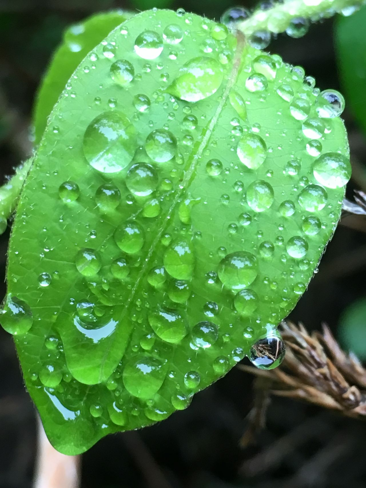 Beauty In Nature Close-up Drop Droplet Focus On Foreground Fragility Freshness Green Color Rain Drops On Leaves RainDrop Raindrops Raindrops On Leaves Water Wet
