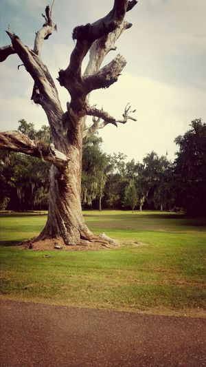 Hugging A Tree Louisiana Oak Trees Mandeville