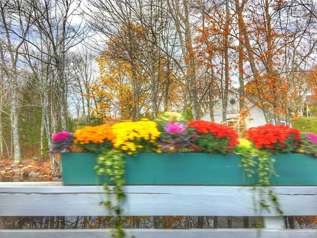 flower, autumn, beauty in nature, tree, nature, multi colored, no people, bare tree, fragility, day, yellow, growth, freshness, outdoors, change, close-up, sky