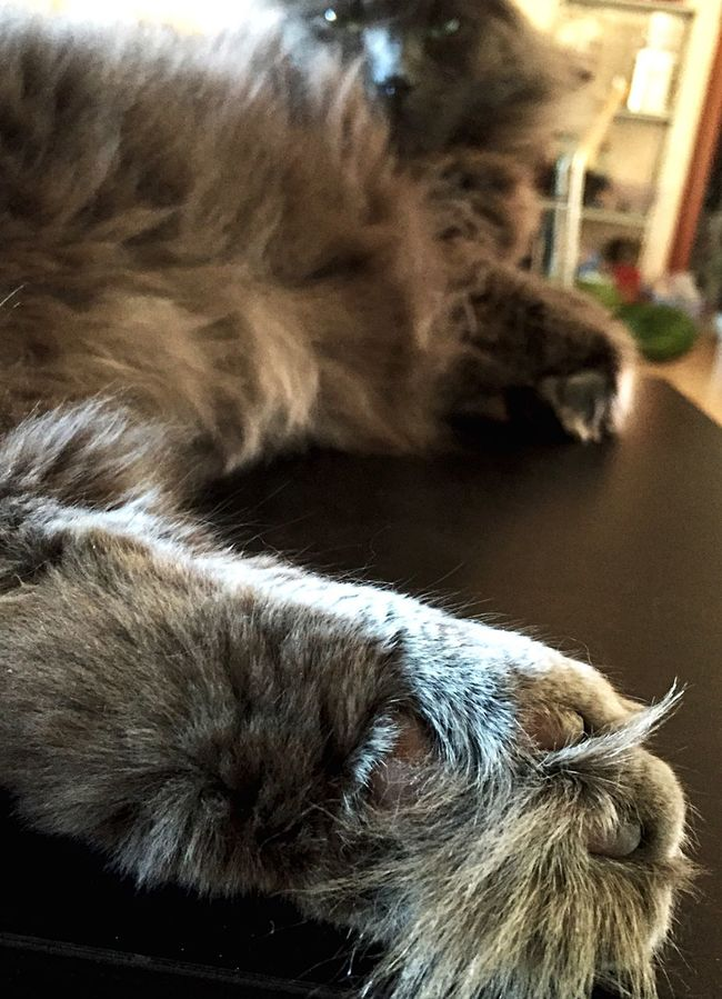 Gatto Gatto😸 Zampa Zampette Zampetta Felino Felinos Cat Cats Zufolo