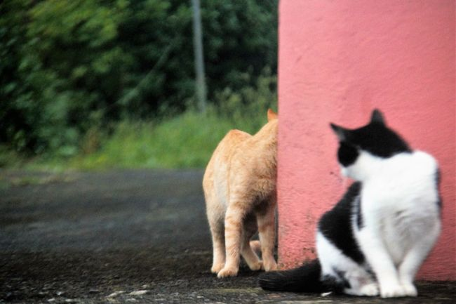 Shooting A Cat...(That Sees Through A Brick Wall) Alpha Male Animal Themes Blackandwhite Cats 🐱 Day Domestic Animals Focus On Foreground Footpath Herbivorous Hiding In Plain Sight Loyalty Mammal No People One Animal Pets Pink Color Shooting Street Wall - Building Feature Zoology TakeoverContrast