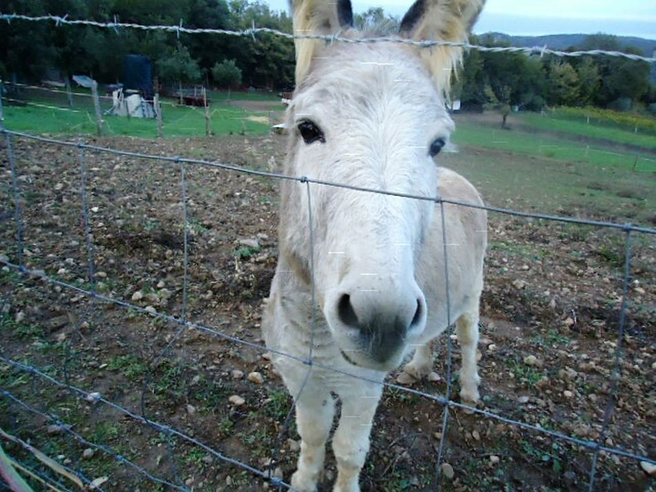 Pasqualino the Donkey | Daytripping in Tuscany | Curious Friend | Travel This Week On Eyeem|