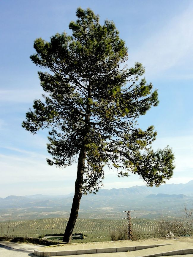 España Baeza Travelling Hugging A Tree Valley Exploring New Ground