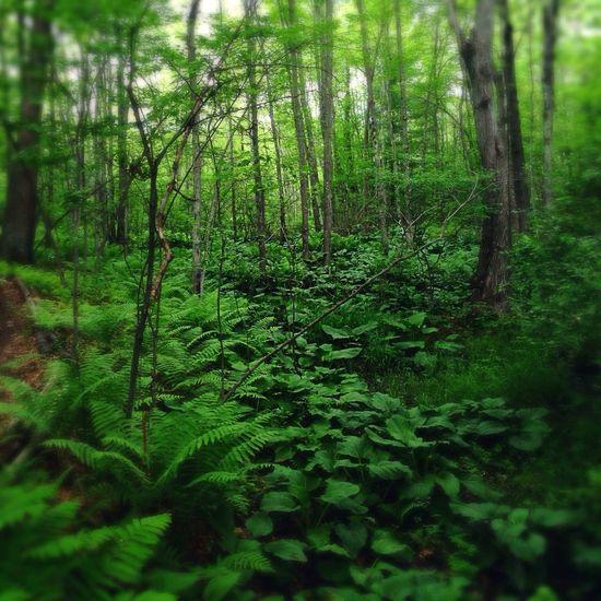 Lush Woods Very Green Urban Hiking IPhone5