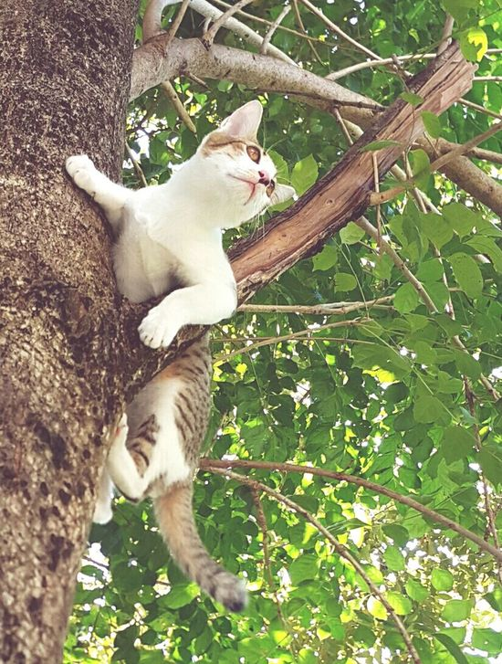 A Cat on a tree. Meow🐱 Cat Lovers Outdoors High Angle View 5months  Curious
