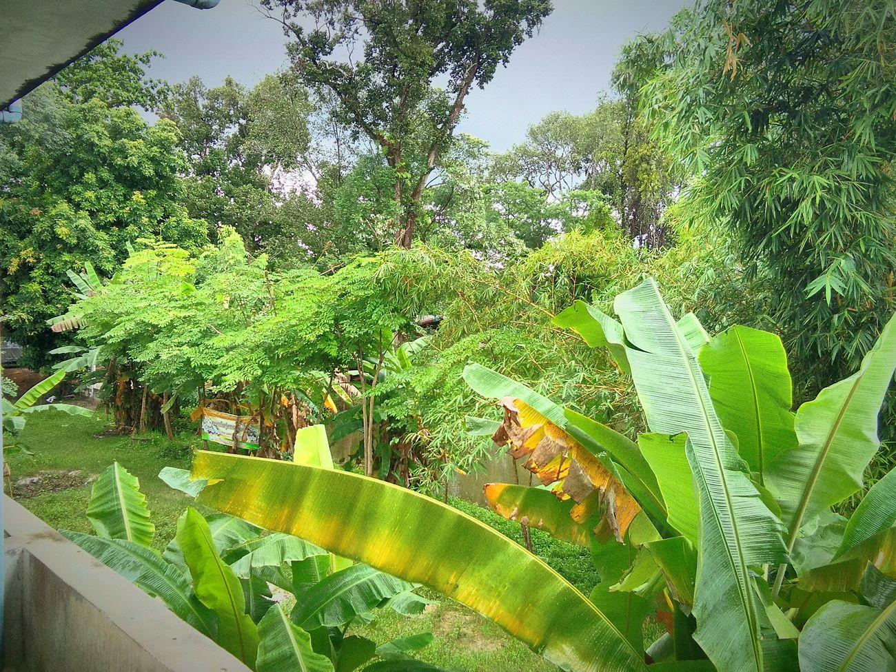 การได้อยู่กับธรรมชาติ มันก็ดีนะ ไม่วุ่นวายดี สงบทำให้เรารู้สึกผ่อนคลาย ธรรมชาติที่รัก