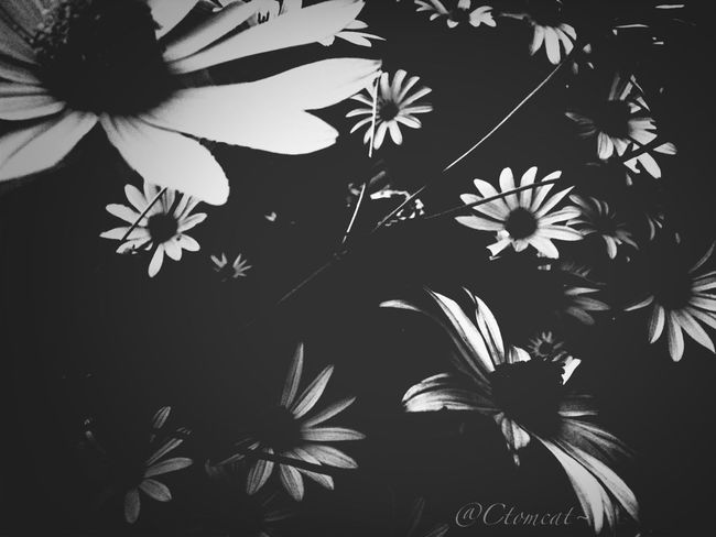Blackandwhite Flowerporn Bw_collection EyeEm Nature Lover