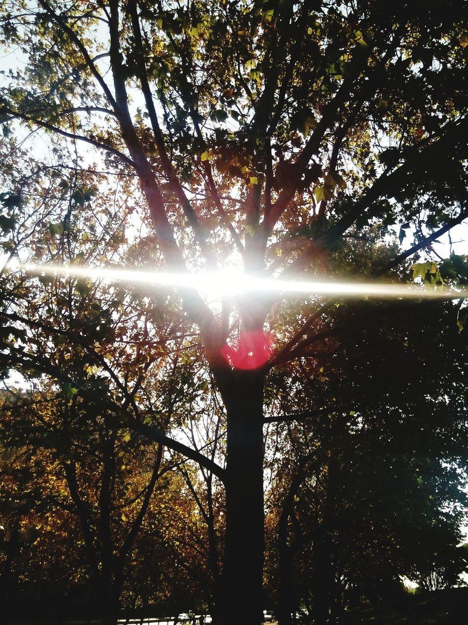 árbol Sun Trhee Wonderful Beauty Nature. Enjoying Life Photography