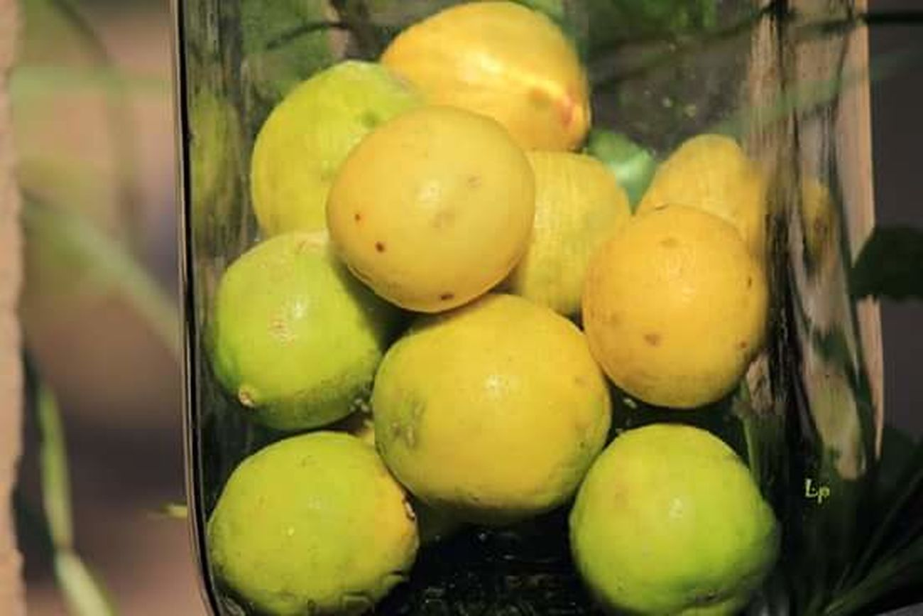 Lemon Lime Limboo Nimboo Citrus Fruits Glass Jar Yellow Green Yellowish Green