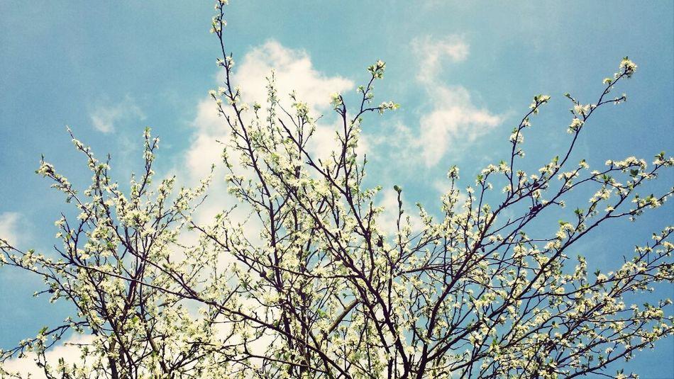 spring ♡