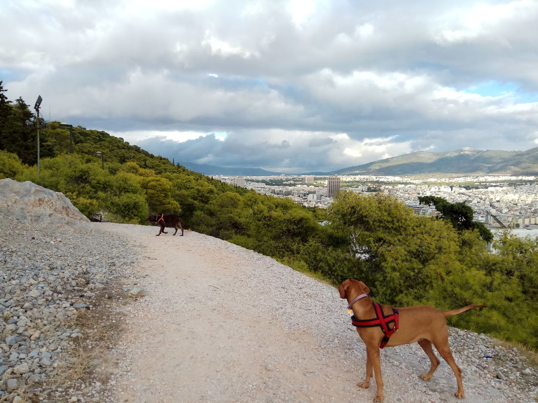 Cloud - Sky Outdoors Lykavittos Hill One Animal No Filter Athens City Lost In The Landscape