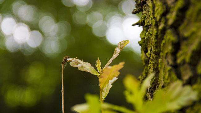 Leaf 🍂 Tree Green Nature Nature Photography Depth Of Field Bokeh Bokeh Photography Bokeh Balls