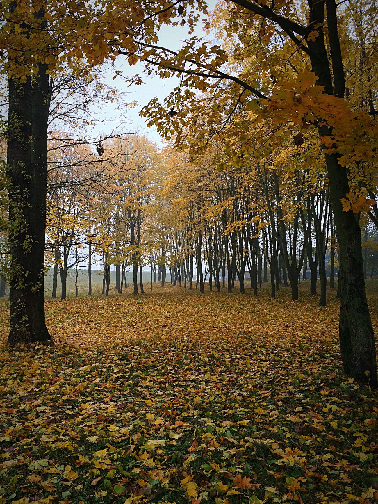 Sad autumn