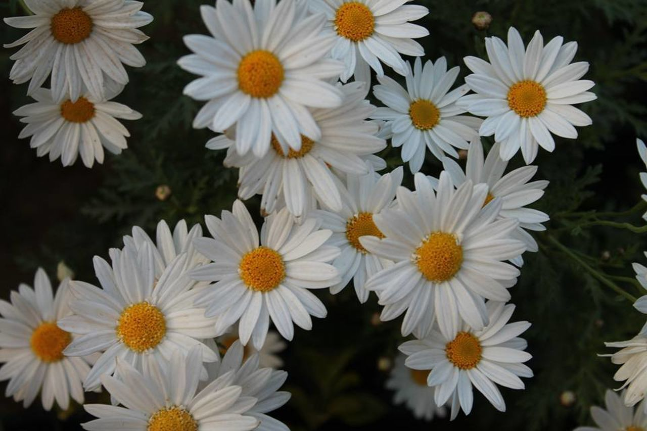 flower, petal, fragility, freshness, plant, growth, nature, beauty in nature, no people, flower head, blooming, outdoors, close-up, day
