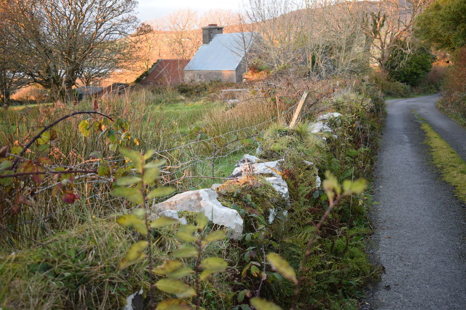 Irish Wall - Cokerry Ireland - House Green Grass Mosscovered Road Trees Fall Beau tDaynForesteGrassfLandscapesMossnNature OutdoorsuScenicsoors scenics