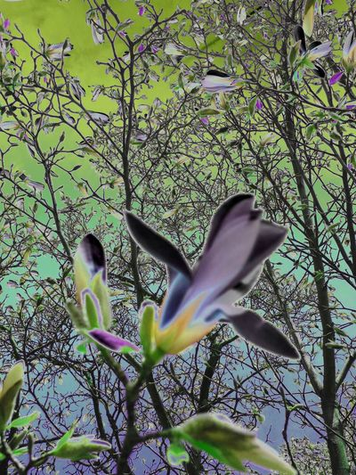 surreal Beauty In Nature Day Flower Growth No People Outdoors Surrealist Art Tree