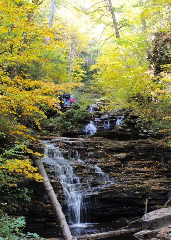 Adult Beauty In Nature Day Fall Colors Forest Growth Hiking Leisure Activity Lifestyles Nature Outdoors People Person Real People Scenics Tree Water Water Fall