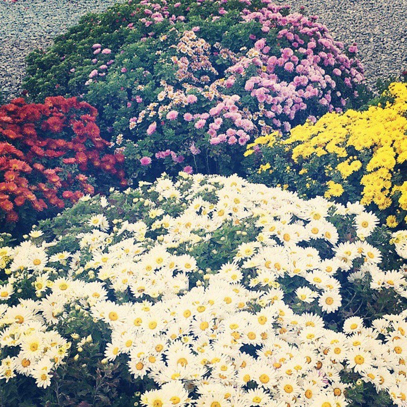 . صبح گل و بلبلی داشته باشین