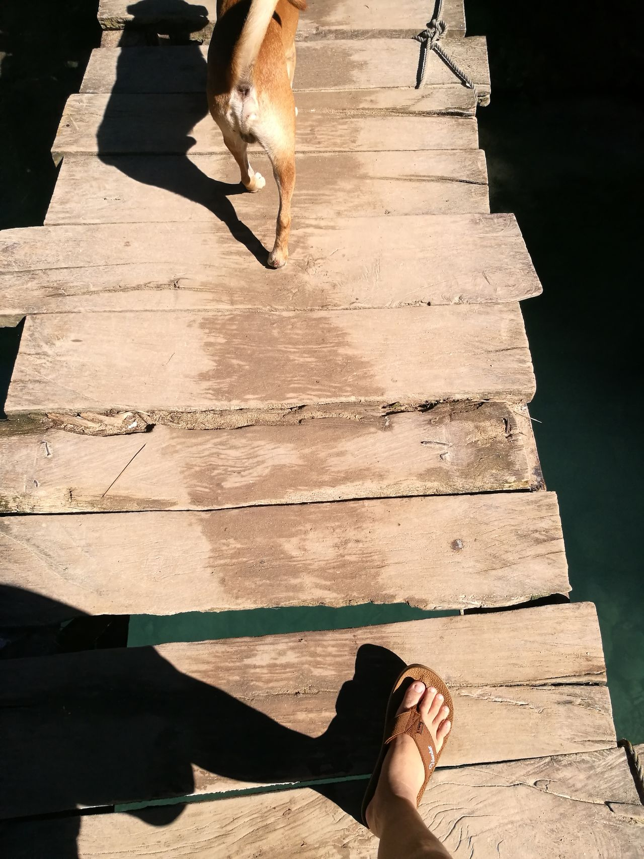 The Wooden Bridge it's when you cannot overtake the dog 😂 Partoftrail Sugbo Outdoors Cebufalls Philippines ❤️ Wanderfeet Queencityofthesouth Islander