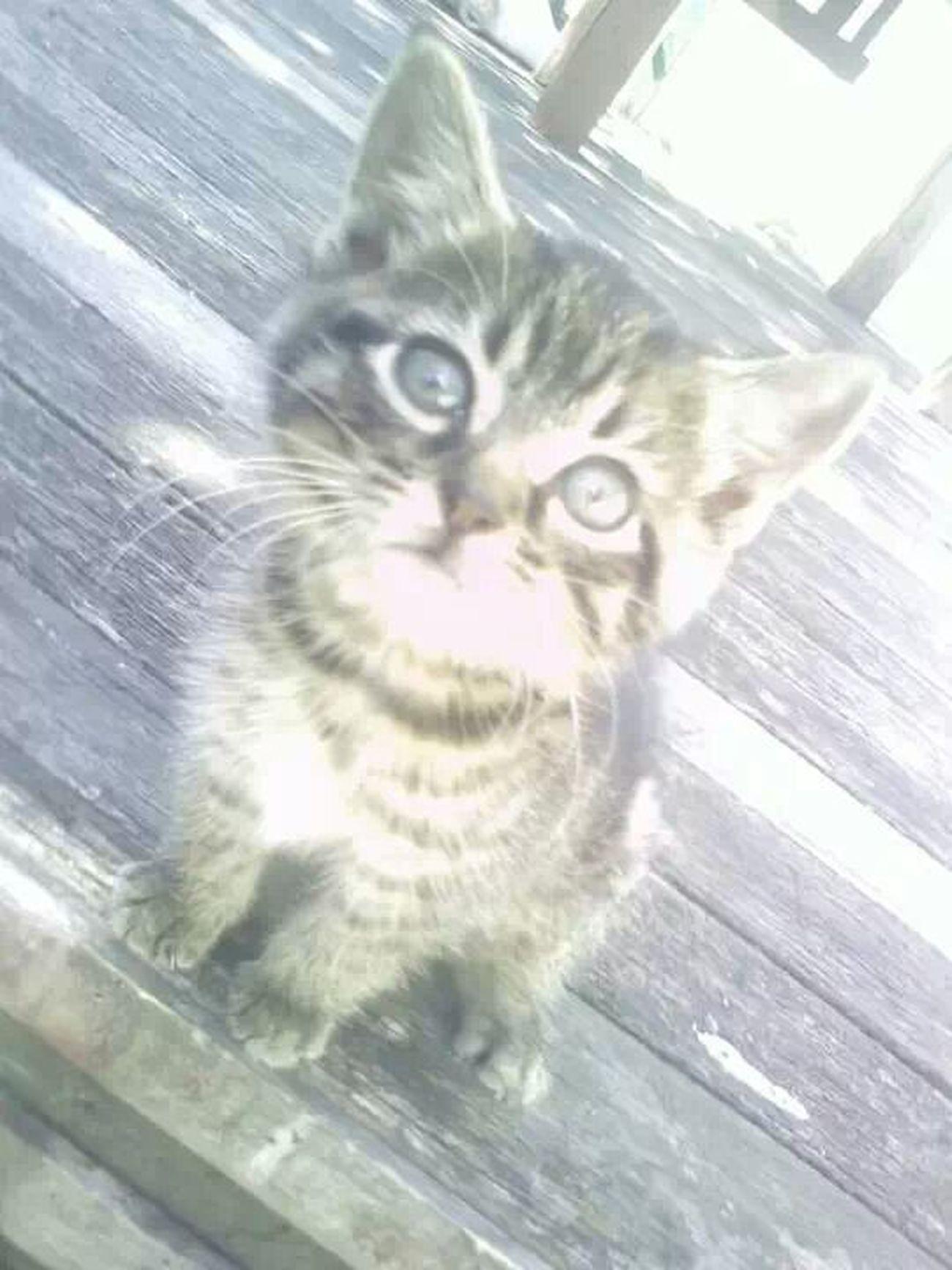 what bubu? Kitten. Twin. Mibebe