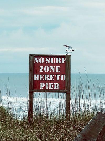 Wilmington NC Nosurfing Sign Beachsign , Beachbird Birdtakingflight WingsUP Seagull