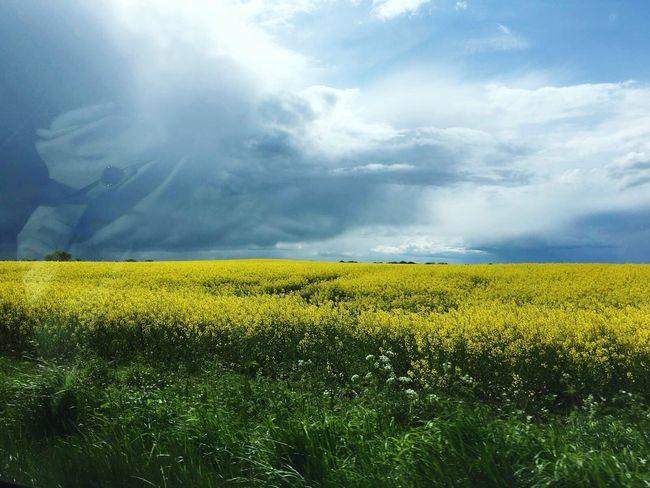 Weather Wolken Sun Sonne Clouds And Sky Feld Field Yellow Enjoying Life