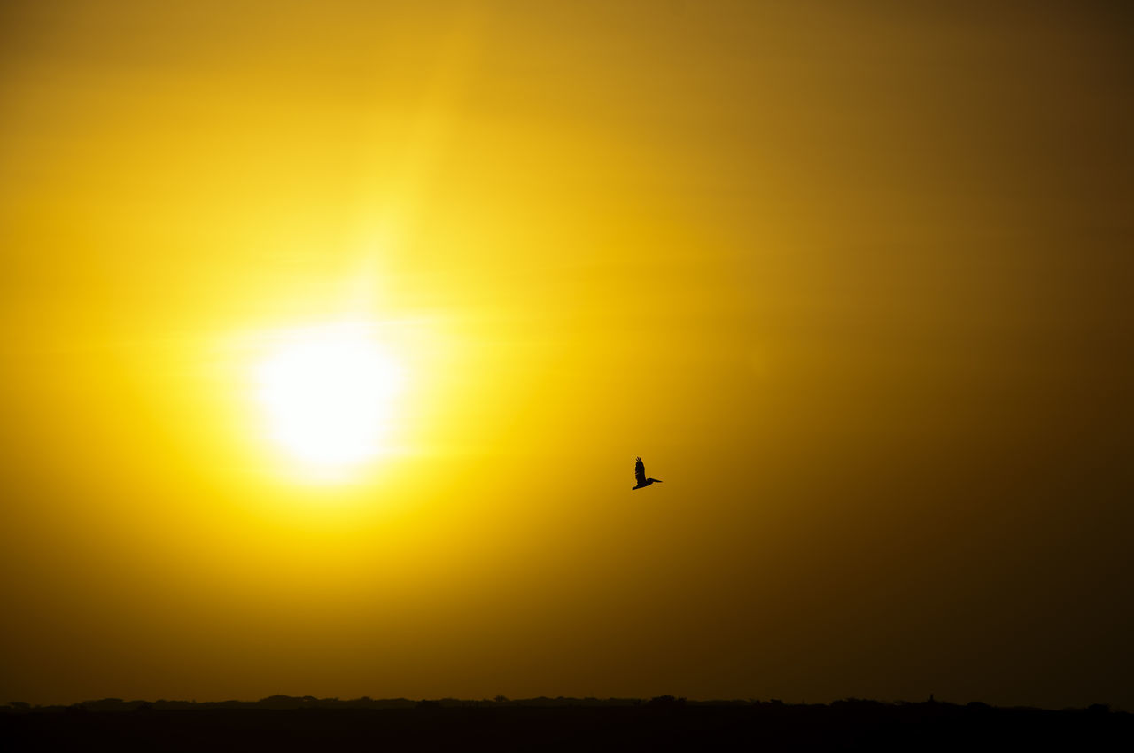 Silhouette of a pelican flying next to the sun. Bird Birds Colombia Flying Idyllic La Guajira La Guajira Colombia Nature Outdoors Paradise Peaceful Pelican Punta Gallinas Scene Scenics Silhouette Silhouette Sky Summer Sun Sunset Vacation Wild Wildlife Yellow