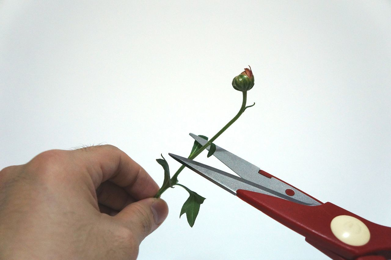Cut! Flowers Hands Hands At Work Scissors Negative Space Open Edit Getting Inspired Taking Photos Handmade For You
