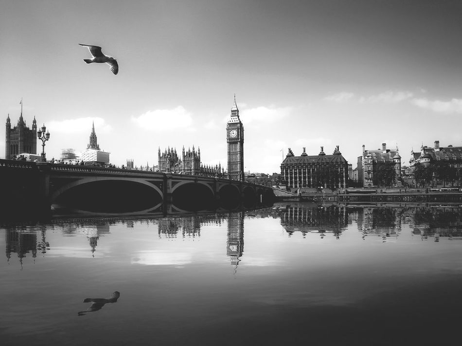 Reflection Water Travel Destinations Architecture Sky Cityscape No People City Day Outdoors Politics And Government London Bridge Westminster London Lifestyle Bird Thames River Thames River England British Great Britain City View