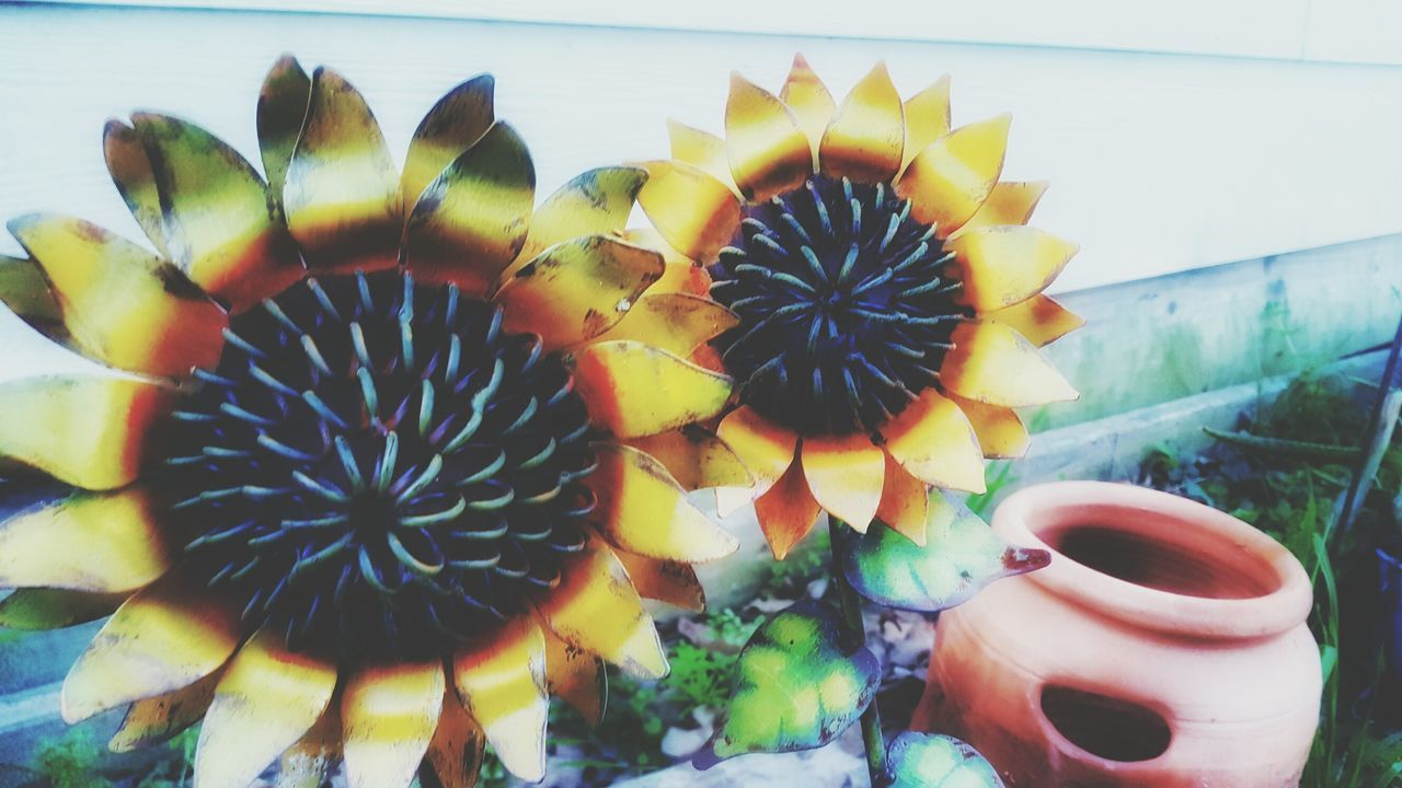 Sun Flower Decorations - Yellow Close-up Plant No People Day Outdoors Flower Nature Freshness Mobile Photography Snapseed Editing  Samsungphotography Samsung Galaxy S6 Edge Yard Flower Yard Art Yard Decor Metal Flower Metal Flower Art