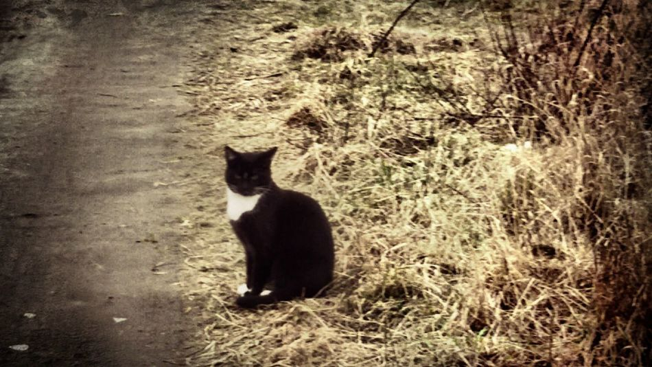Cat Cats Black White Colors Animal Pupie Pupies One Animal Nature Grass Pets No People Poland 💗 Yellow Color Yellow Poland Nature Sweet Pet Blackandwhite BLackCat Catblack Black And White Black & White