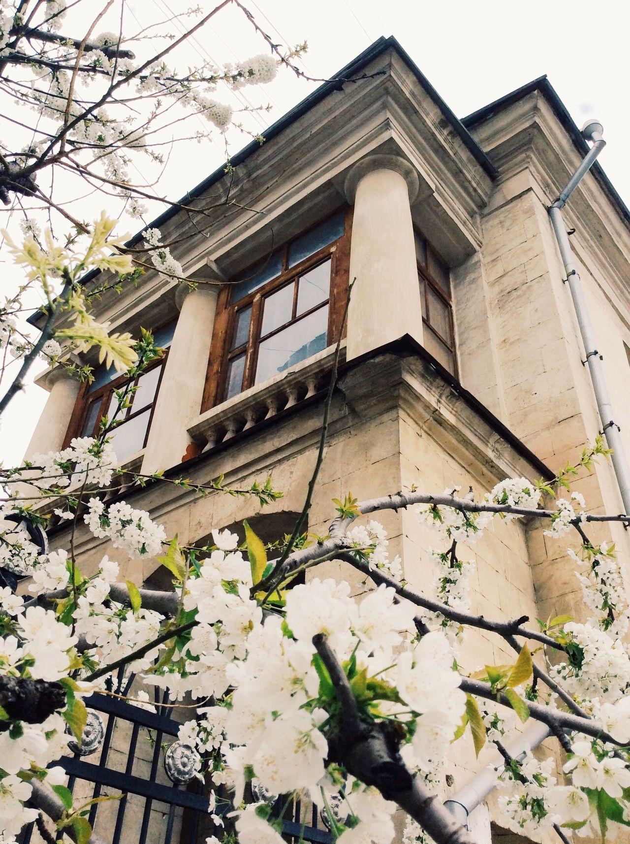 Sevastopol  Architecture Built Structure House Building Exterior Tree No People Crimea Spring Flower Nature