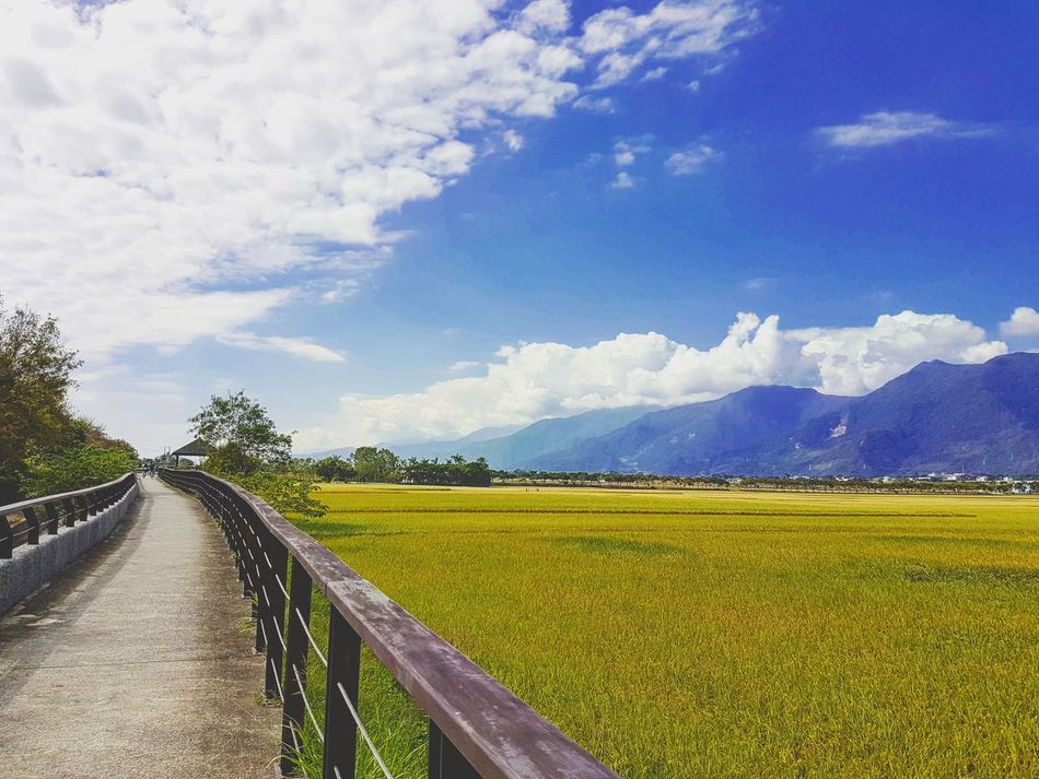Agriculture Beauty In Nature Growth Rural Scene Cloud - Sky Landscape Nature The Way Forward Tranquility Field Flower Sky Springtime Cloud Photography Nature Beauty In Nature Endless Travel Photo Quiet Moments Blue Taiwan Nature Photography Taitung,taiwan