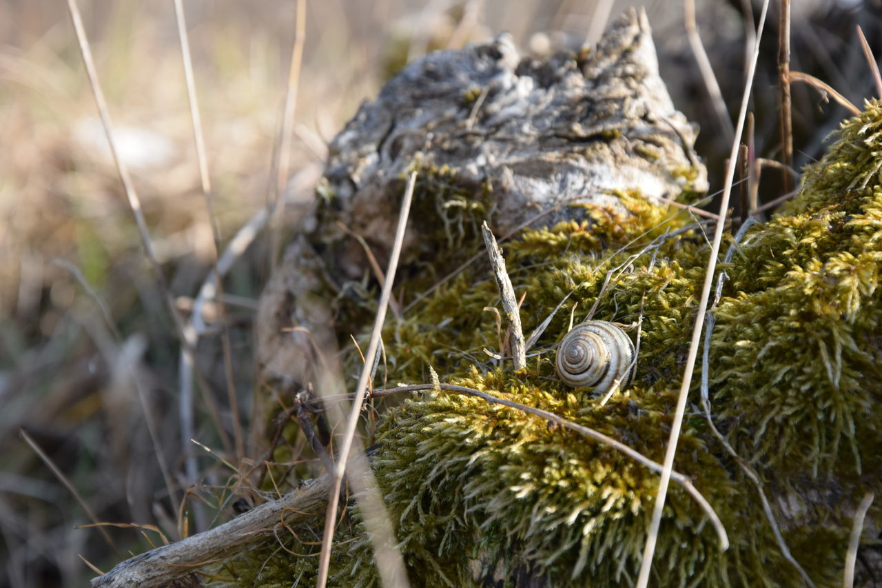 Moss Moss Covered Tree Stump Snail Snail Shell Close Up Nature Macro Photography Nature_collection Nature Photography
